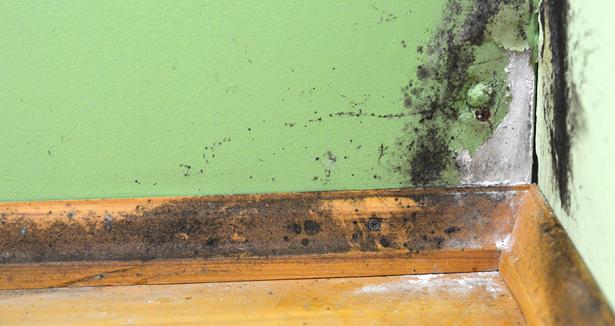 Contamination des habitations par les moisissures bnq